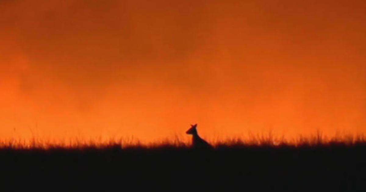 Worldwide effort to save Australia's animals amid devastating wildfires