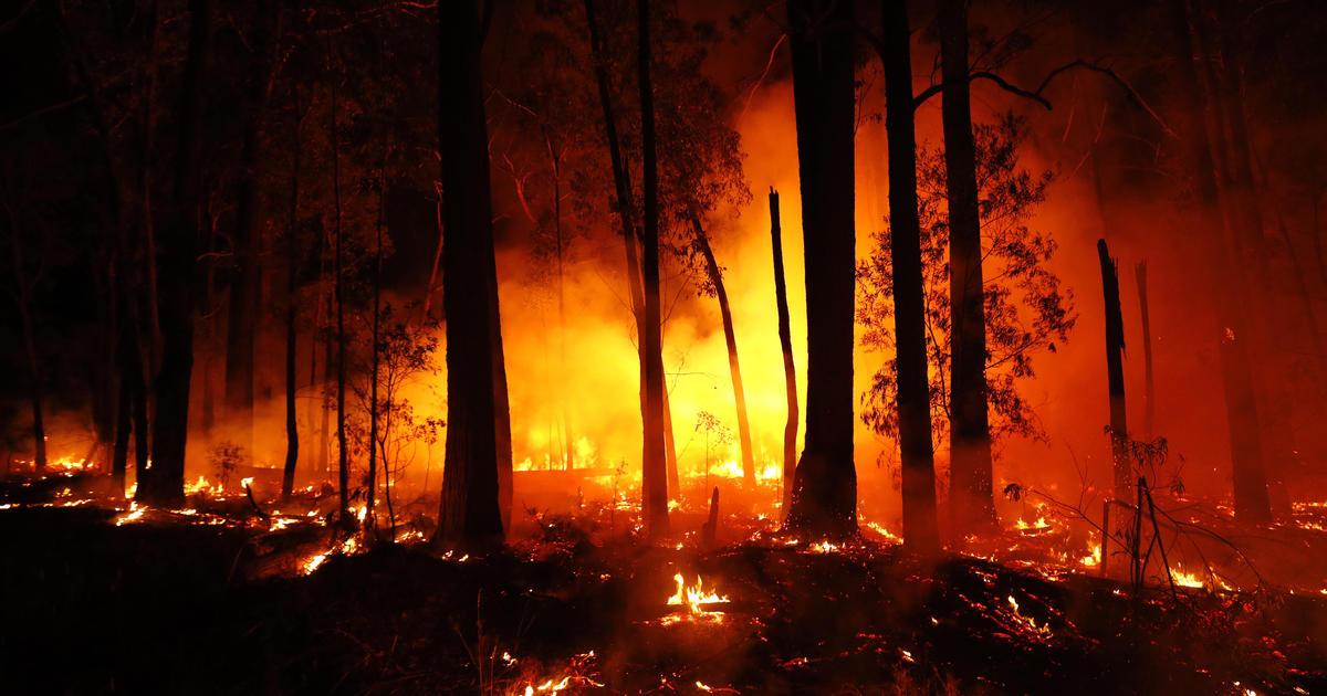 Australia wildfires news: Leonardo DiCaprio's Earth Alliance donating $3 million to help Australia wildfires