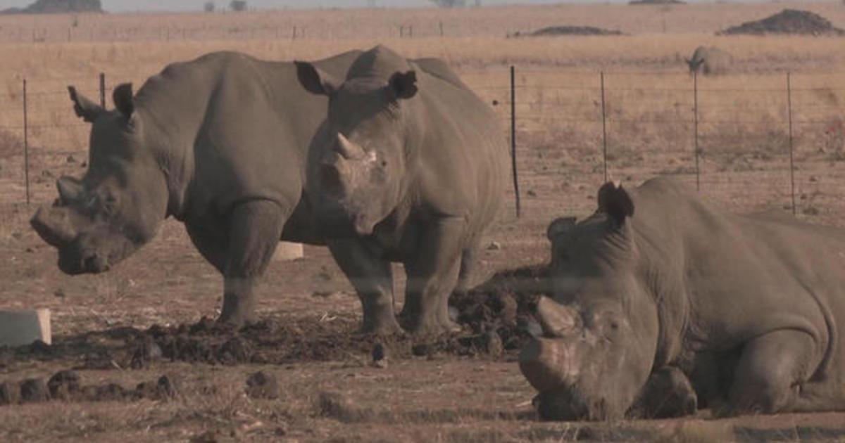 Upside-down rhinos win scientists Ig Nobel prize