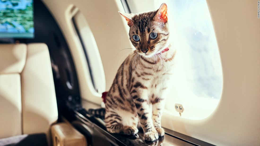 Why more travelers are flying their pets by private jet